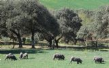 Alojamiento RuralCasa Jazmín